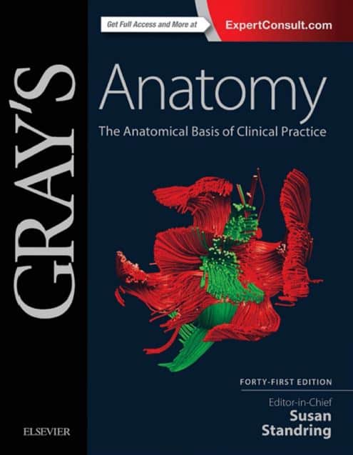 gray anatomy 41e